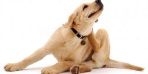 pastillas desparasitar perros tiendanimal