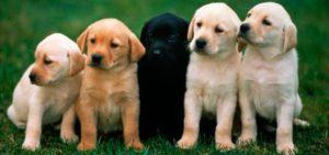 pastillas desparasitar perro