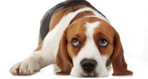 pastillas desparasitar perros